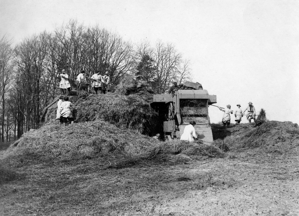 A group of women working outdoors to thresh hay
