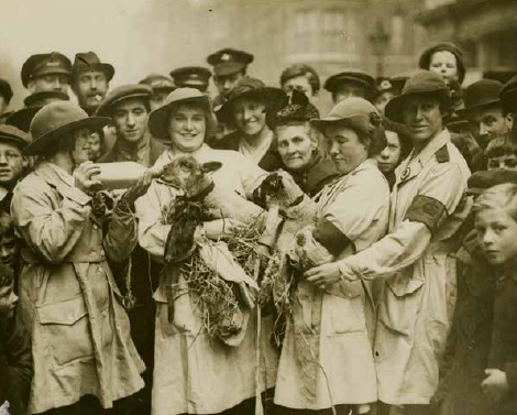 Sepia archive image of a crowd surrounding four women in uniform, feeding a lamb