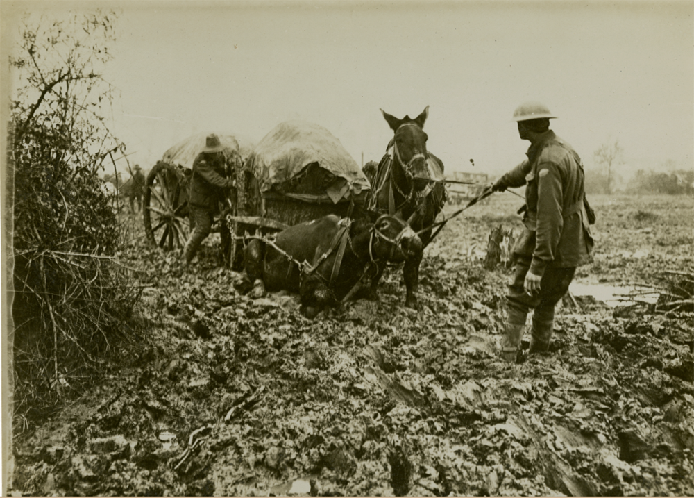 Black and white archive photograph of a man pulling a mule and cart through mud