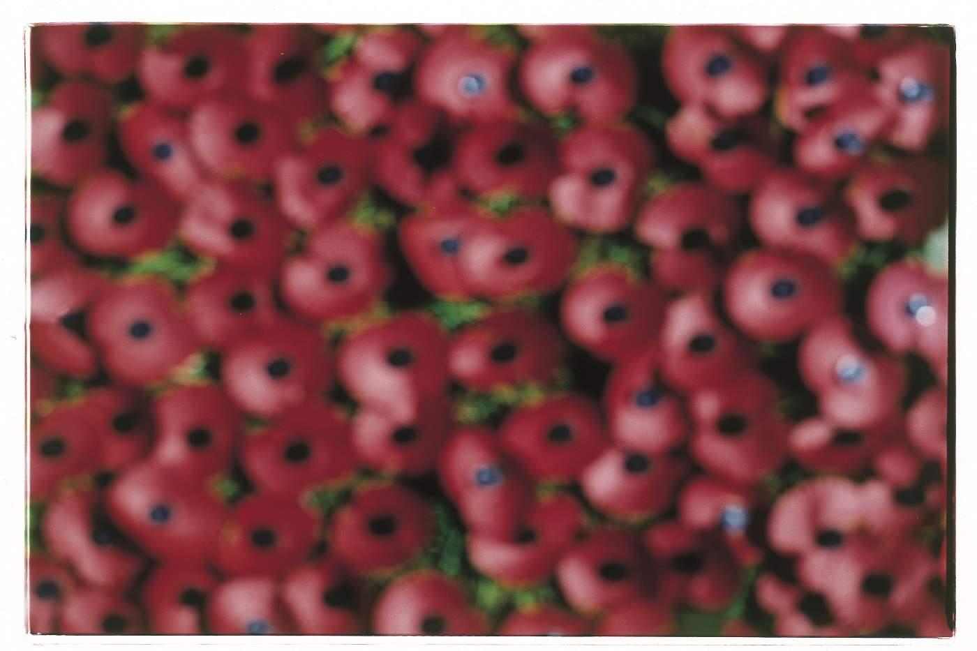 out of focus poppies