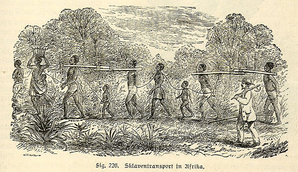 A black and white image shows a line of bound slaves being transported through a forest by a European slaver.