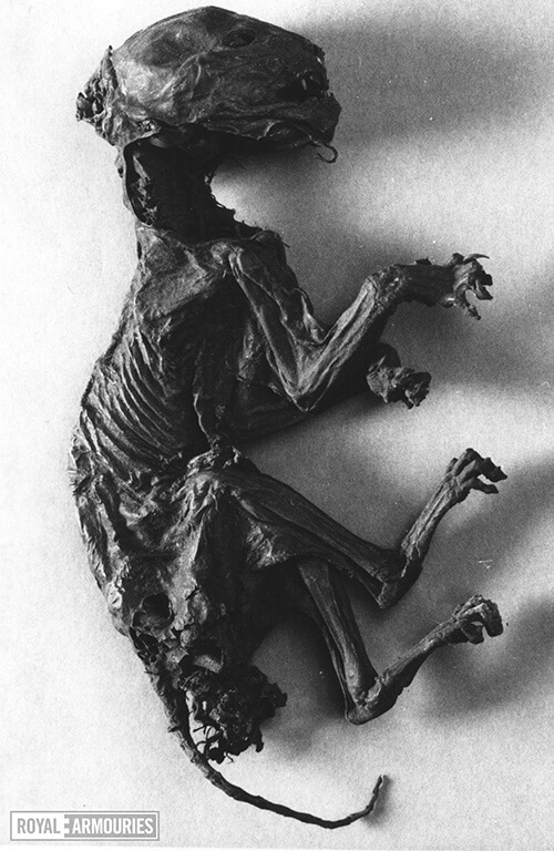A mummified cat. It is blackened and withered and appears to have an angry expression on its face.