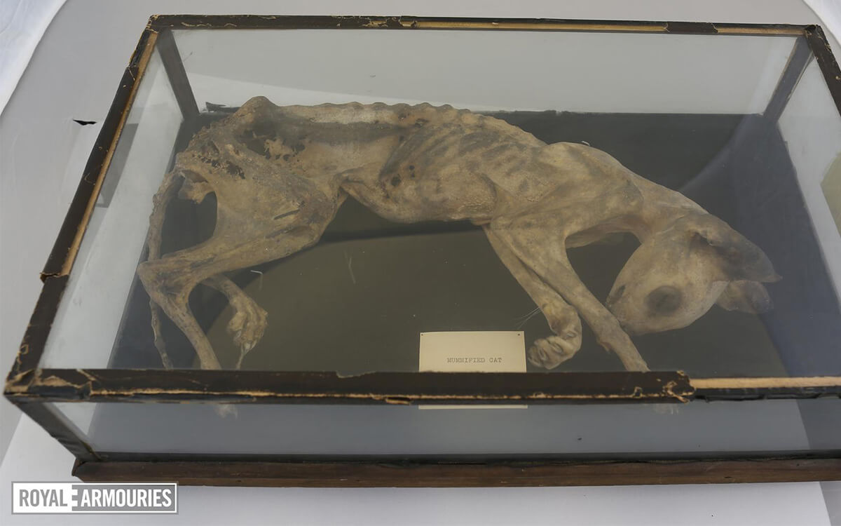 A white coated mummified cat lays in a glass display box.