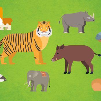 Spot the animals